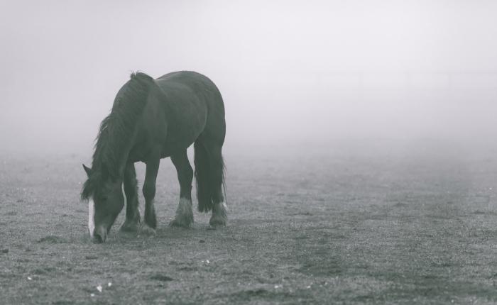 God's voice, like horsesgrazing